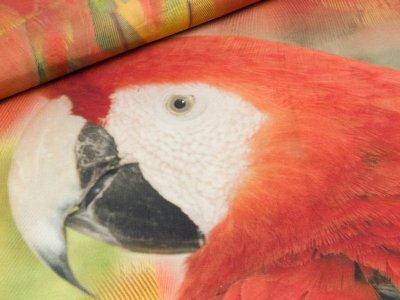 Jersey Digitaldruck Stenzo PANEL ca. 150 x 150 cm - Papagei - bunt/gelb