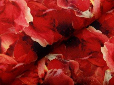 Jersey Digitaldruck Auva - hübsche Blumen - schwarz