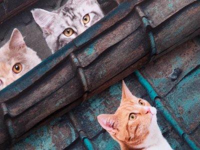 Jersey Digitaldruck Stenzo PANEL ca. 120 cm x 150 cm - Katzen in der Stadt - petrol