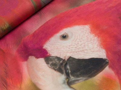 Jersey Digitaldruck Stenzo PANEL ca. 150 x 150 cm - Papagei - bunt/orange